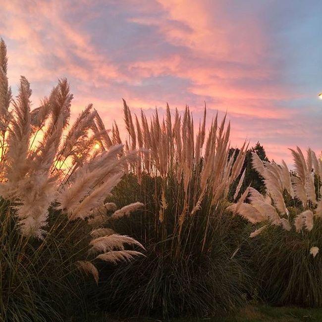 Sunrise Amanecer Leverdesoleil Auringonnousu Hospitaletdellobregat Plants Colorfulsky Photocatchers Earth_deluxe Sunsunsun_hereitcomes
