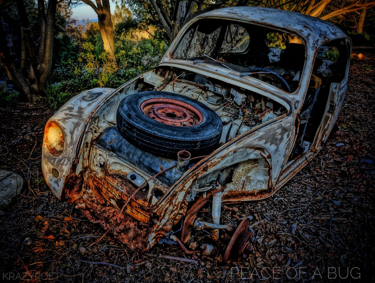 ||Peace of a Bug|| #bug #vw #vwbeetle #hdrart #peace #atpeace #peaceofabug HDR VW Peace Vwbettle Hdr_Collection Hdrphotography Hdr_lovers Hdr_gallery Hdr_pics Positivity