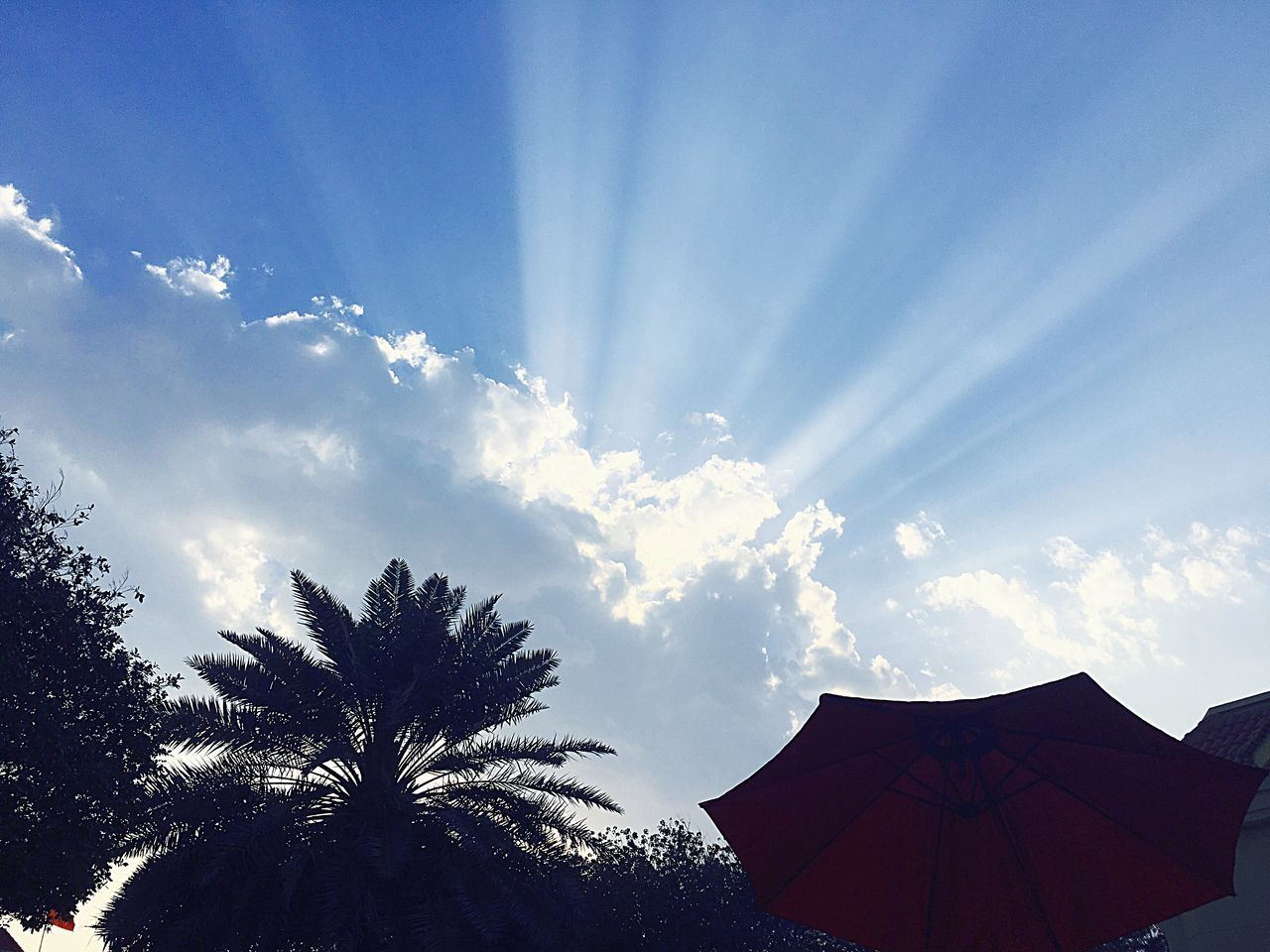 EyeEm Best Shots Bahrain Relaxing In The Garden Friday Hamala Clouds And Sun IPhoneography Iphone 6 Plus EyeEmNewHere EyeEmbestshots EyeEm Best Shots - Sunsets + Sunrise