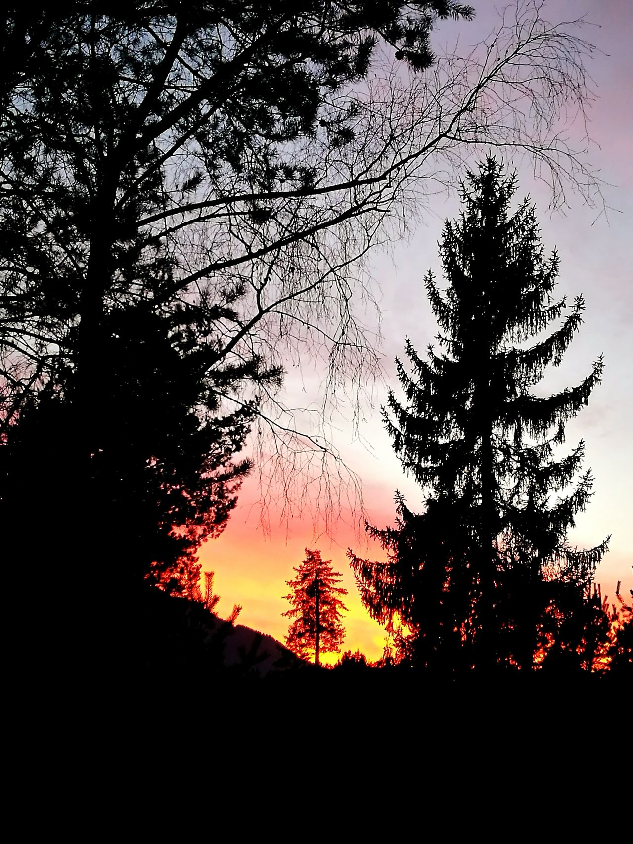 Nature Silhouette Tree Sky Sunset No People Beauty In Nature Outdoors Tranquility Scenics Day Walking Around Villach Orange Color Tranquil Scene Silhouette Tree Sunset Silhouettes Evening Glow Sky And Trees Welcome To Black