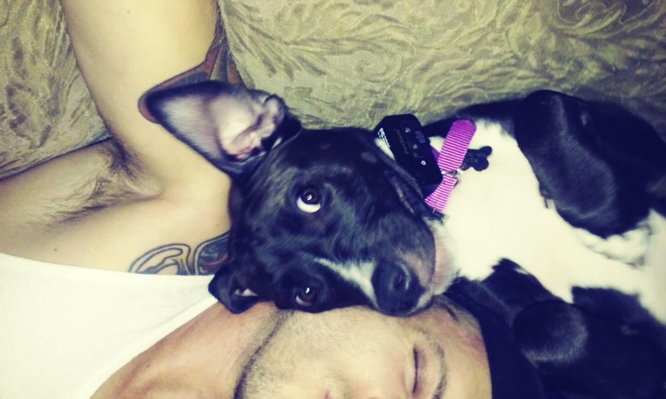 Wendy cuddling with daddy! Pitbulllover Americanpitbullterrier LIFE'S THE PITS Pitbull♥ PitBullNation Loving Pits Pitbullsofinstagram Guyswithtattoos Pitsandtats Aboyandhisdog