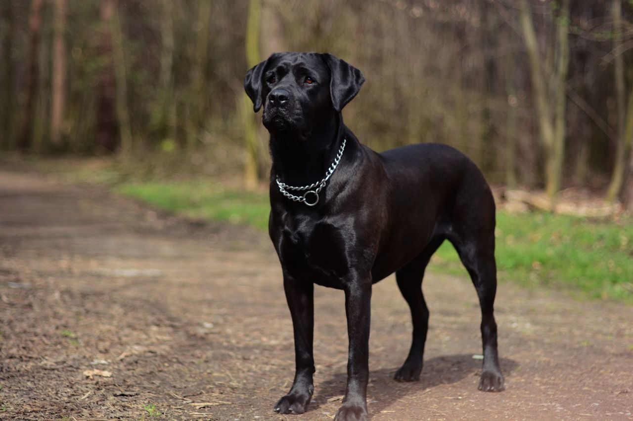 nicest dog Animals Black Black Color Cute Cute Pets Dog Field Forest Goodgirl Lovely Natural Nature Nikon Nikon D3200 Nikonphotography No People One Animal Outdoors Pets Pretty Protection