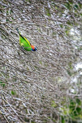 Nature Colors Photography Noeffect Check This Out Tijuca's Forest Animals Perfection Beautiful Nature Bird