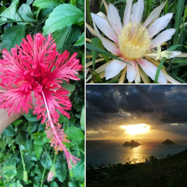 B -e-a-u-tiful Lanikai  Pillboxes Sunrise Hibiscus Skyporn Nature Luckywelivehi Flowers Nofilter Epichi Twinislands