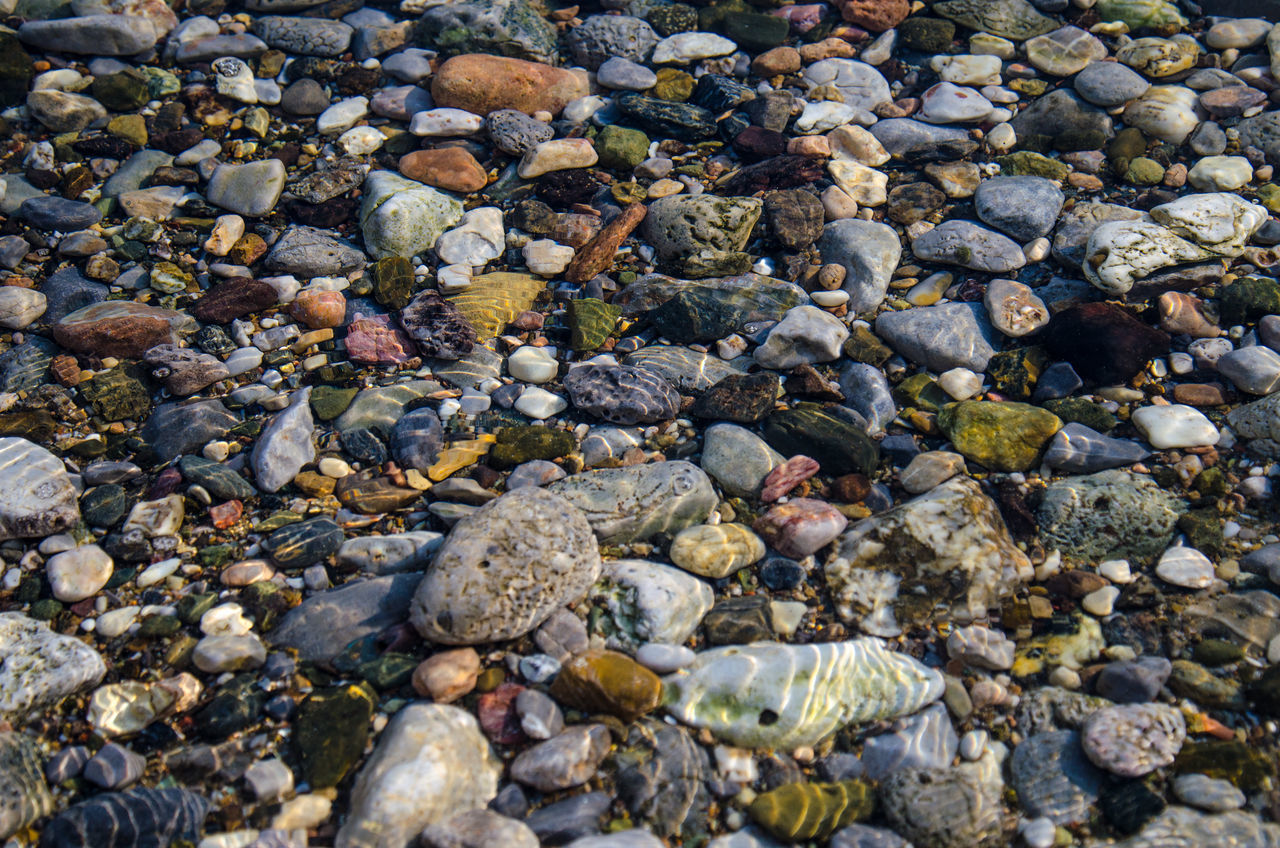 pebble, pebble beach, beach, shore, stone - object, full frame, nature, rock - object, no people, outdoors, day, sea, animal themes, water, beauty in nature, sea life, close-up