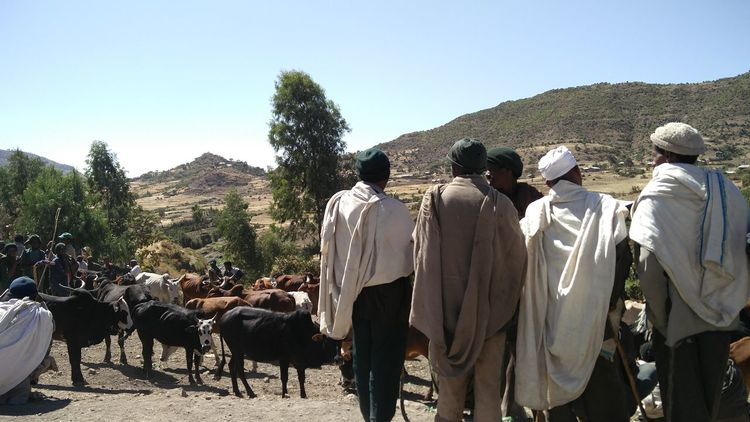Men negotiating at weekly cattle fair, rural Ethiopia Weekly Fair Pricing Cattle Business Stories Negotiations Men At Trade Shades Of Winter Traditional Wear At The Market. Community Spirit Ethiopians Group Of Men Sunday Morning Ethiopia Togetherness Day Outdoors