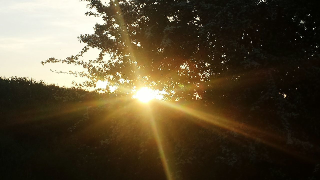 sunbeam, sun, tree, nature, sunlight, no people, tranquility, low angle view, growth, sky, beauty in nature, outdoors, sunset, scenics, day