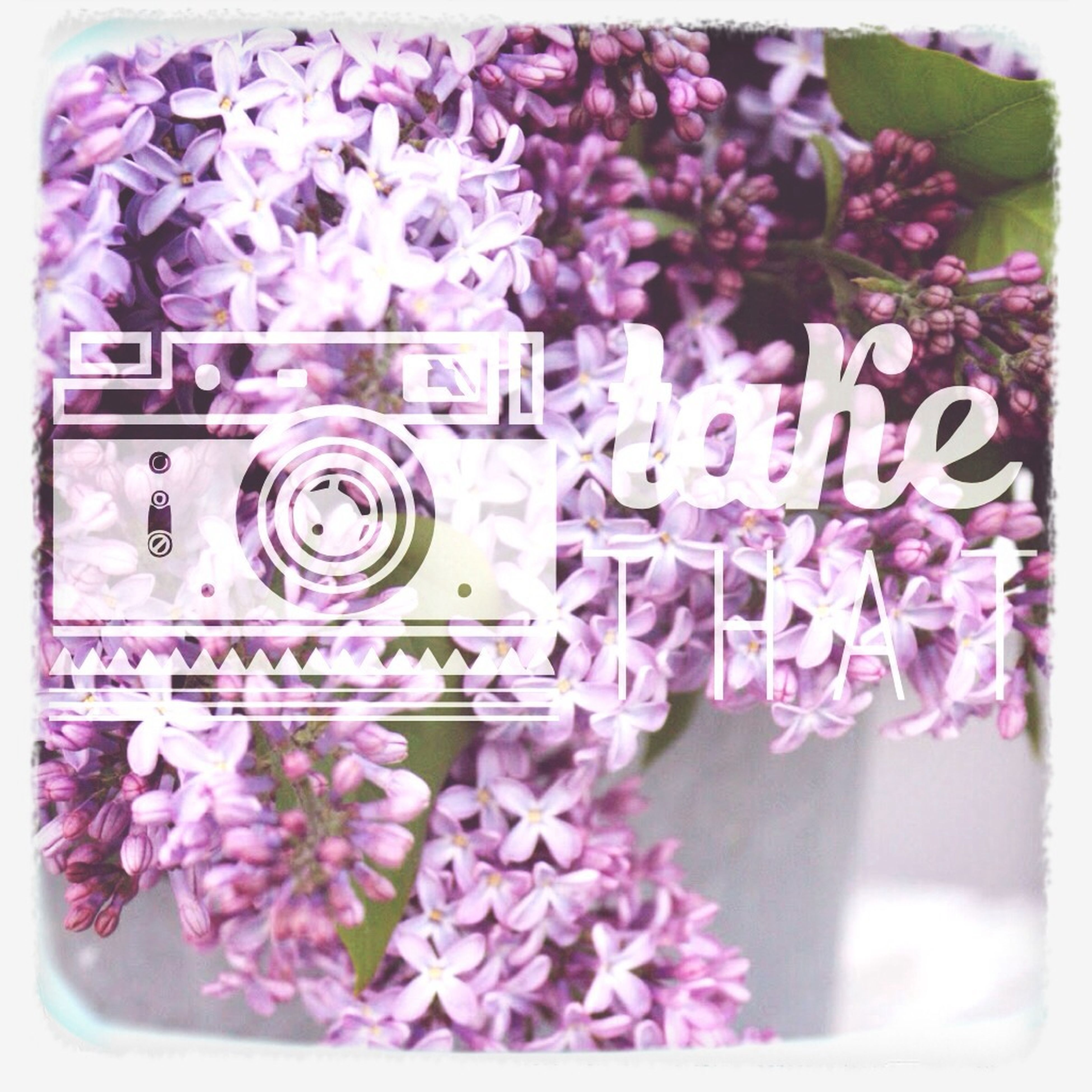 transfer print, flower, auto post production filter, pink color, freshness, close-up, fragility, plant, growth, petal, text, built structure, flower head, wall - building feature, day, building exterior, focus on foreground, nature, western script, no people