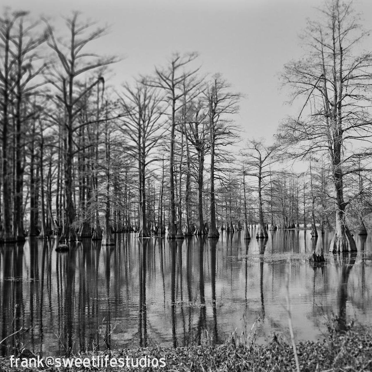 Cypress Swamp Nature Tree Water Bare Tree Lake Tranquility Sky No People Outdoors Beauty In Nature Snow Day Cold Temperature