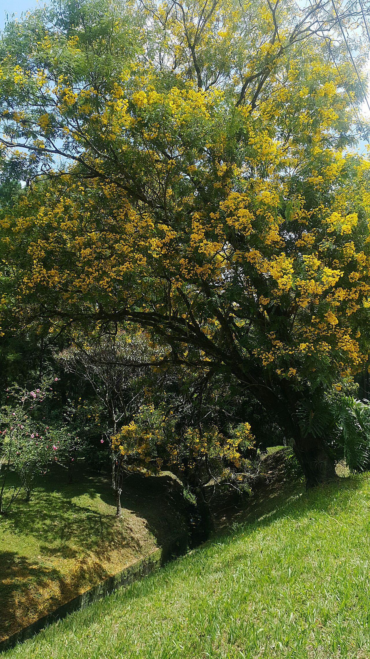 Color mix nature Parque das Vertentes São Paulo Serra Negra