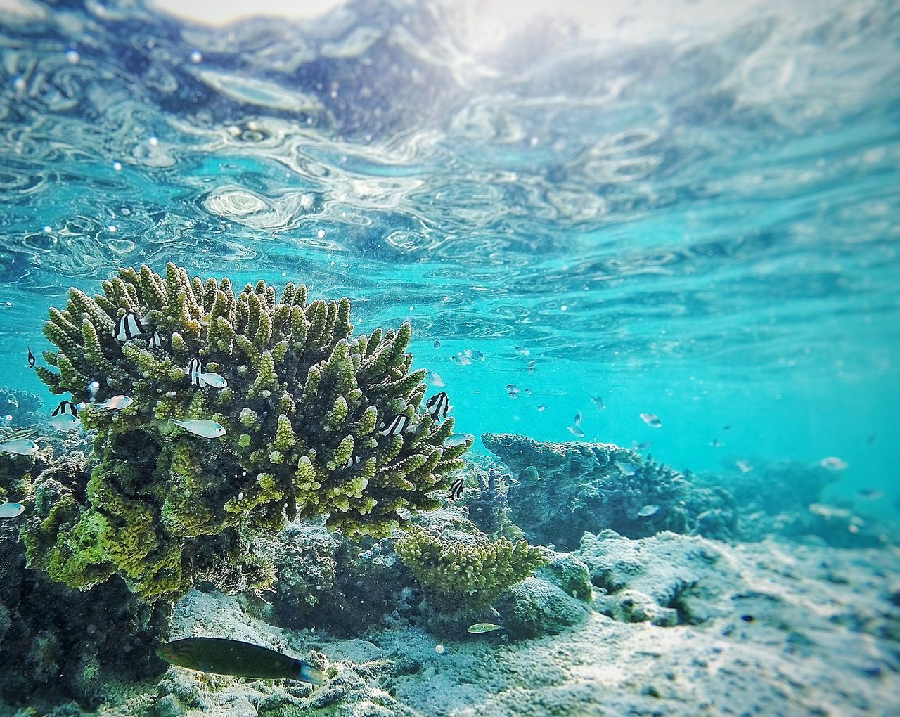 underwater, undersea, water, sea, nature, sea life, blue, coral, no people, animals in the wild, day, animal themes, beauty in nature, outdoors