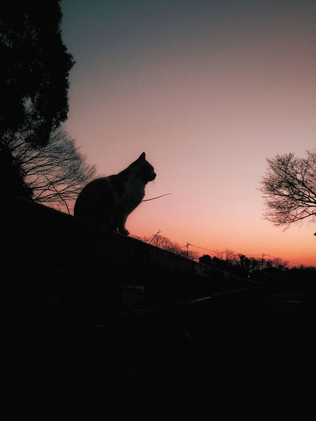 Silhouette Streetphotography Sunset Beautiful Eyem Best Shots Check This Out IPhoneography Cat Animal