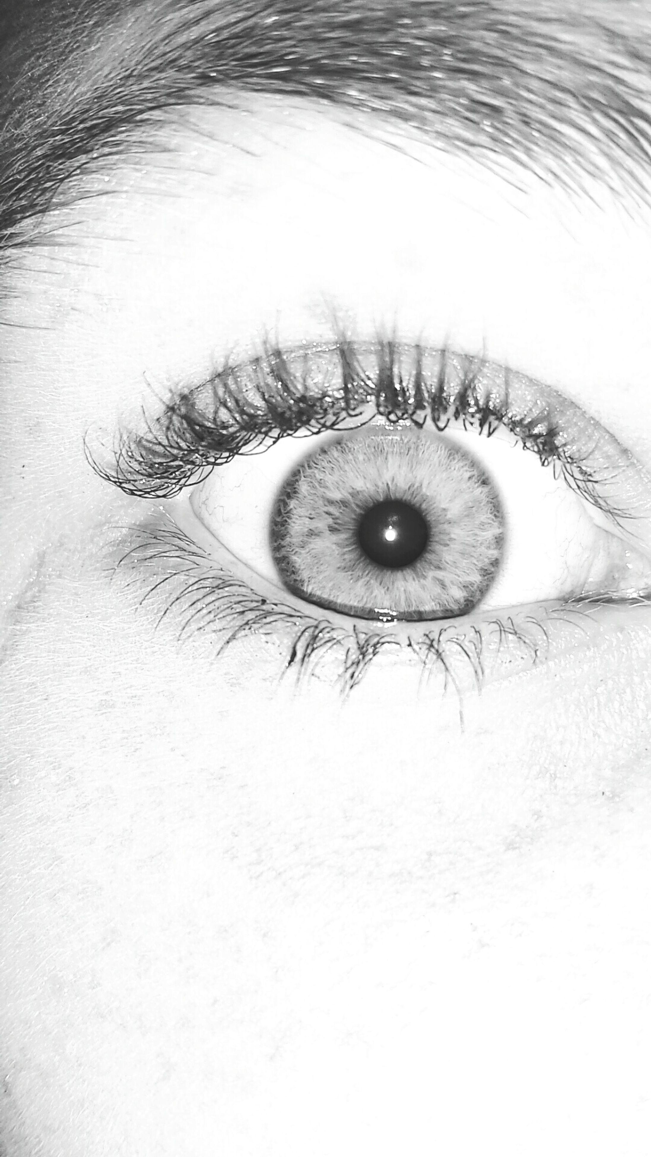 human eye, close-up, looking at camera, sensory perception, eyesight, portrait, eyelash, part of, circle, eyeball, high angle view, iris - eye, full frame, indoors, extreme close-up, staring, unrecognizable person