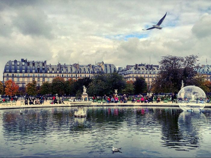 Adapted To The City Sky Cloud - Sky Bird Water Large Group Of People City Day People Crowd First Eyeem Photo Paris Paris, France  Garden Cityscape Cityscapes