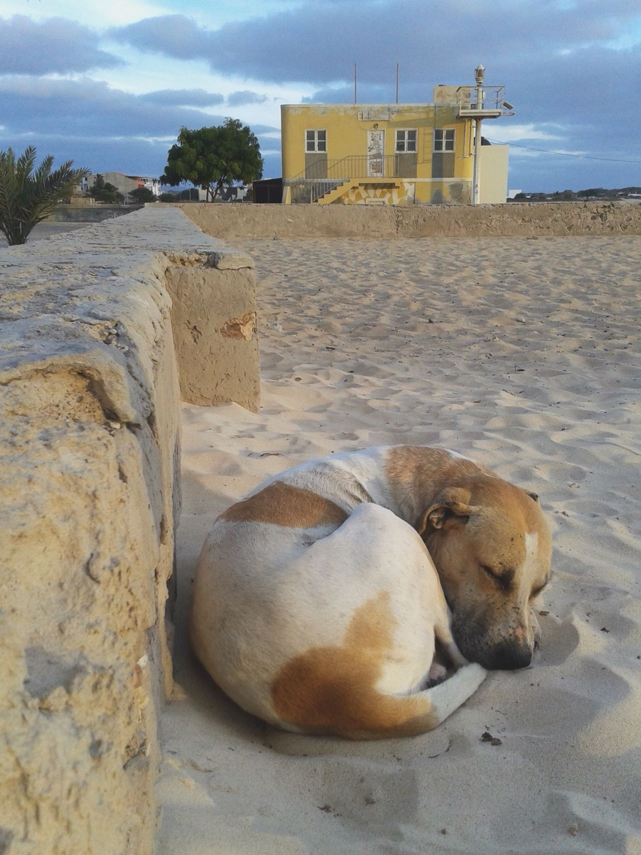 Beauty In Nature Cloud Cloud - Sky Day Dog Domestic Animals Found On The Roll Lying Down Mammal Nature No People Outdoors Pets Relaxation Relaxing Resting Shore Sky Tranquility at Praia De Diante in Sal Rei , Boa Vista, Cabo Verde Cape Verde Night Night, Sleep Tight