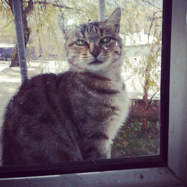 Dâvetsiz Misafir Pencere Kenarında . :) Animal Hayvan Hayvanlar Kedi Kedicik