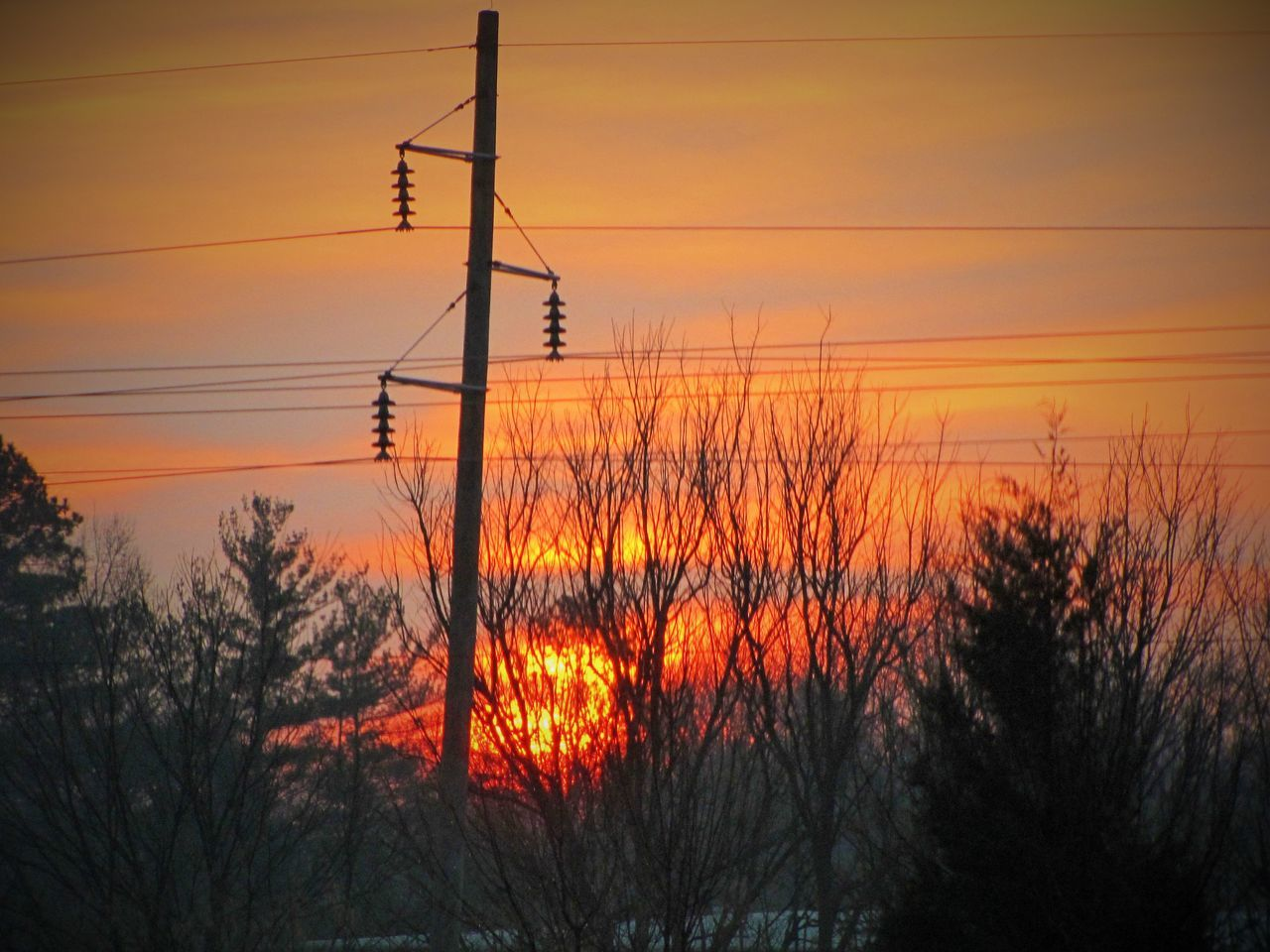 Trees And Power Lines At Sunset