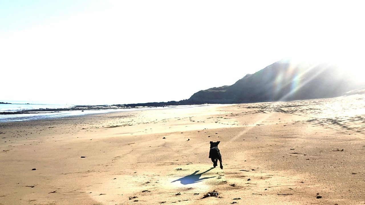 Beach Sand Sea Dog One Animal Nature Silhouette Full Length Pets Sky Outdoors Scenics Vacations Landscape Animal Themes r Running Dog Close-up Sandy Beach Focus On Foreground From My Point Of View Capture The Moment Silhouette Eyem Nature Lovers  Tranquility Locquirec, France