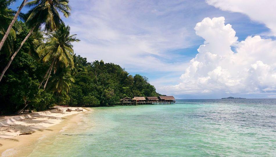 Raja Ampat Clear Sky No People INDONESIA Travel Destinations Palms Paradise The Last Paradise Travel In Indonesia Papua Papua Barat East Indonesia