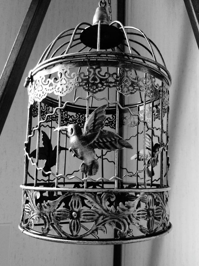 ON THE TRIPOD Bird Cages MUR B&W Black And White Monochrome Photography