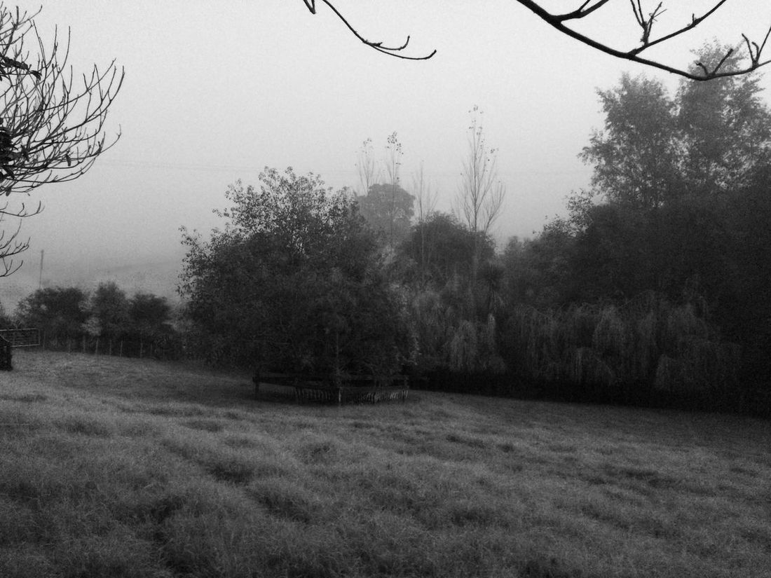 Pukekohe Buckland Waikato In My Garden