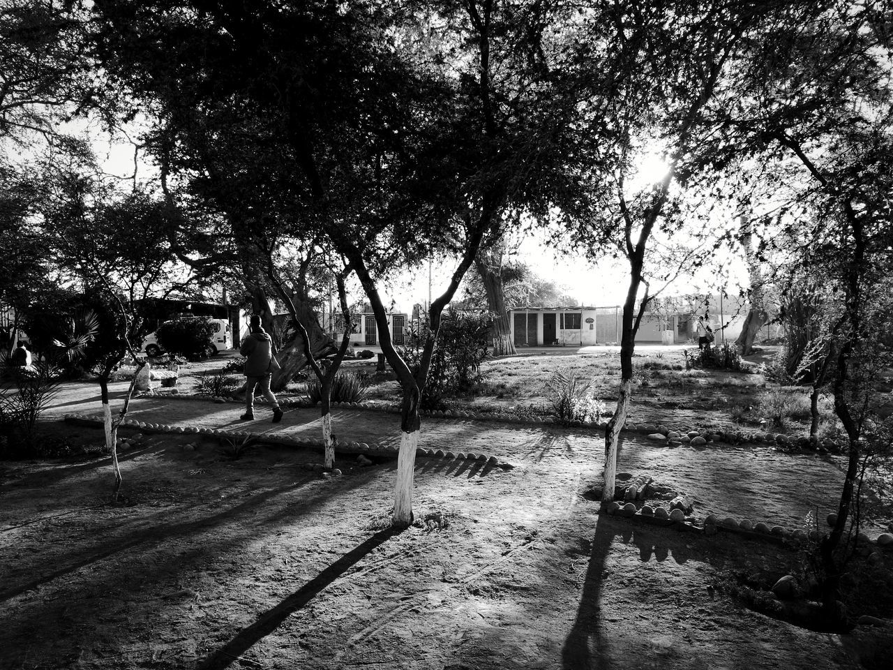 Garden in Ica Tree Street Outdoors Day Building Exterior Shadow Built Structure No People Architecture Nature Branch City Sky Landscape_photography Fresh 3 Leica Huawei P9 Eye4photography  EyeEm Best Shots Blackandwhite Blancoynegro Biancoenero TreePorn