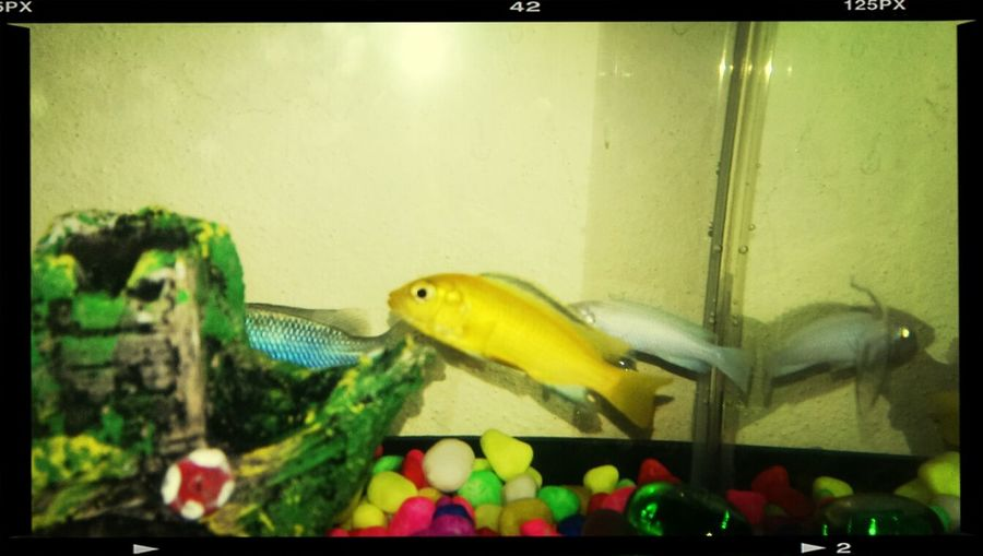 Coni lahanti estamim. :) Fish Balik Ciklet