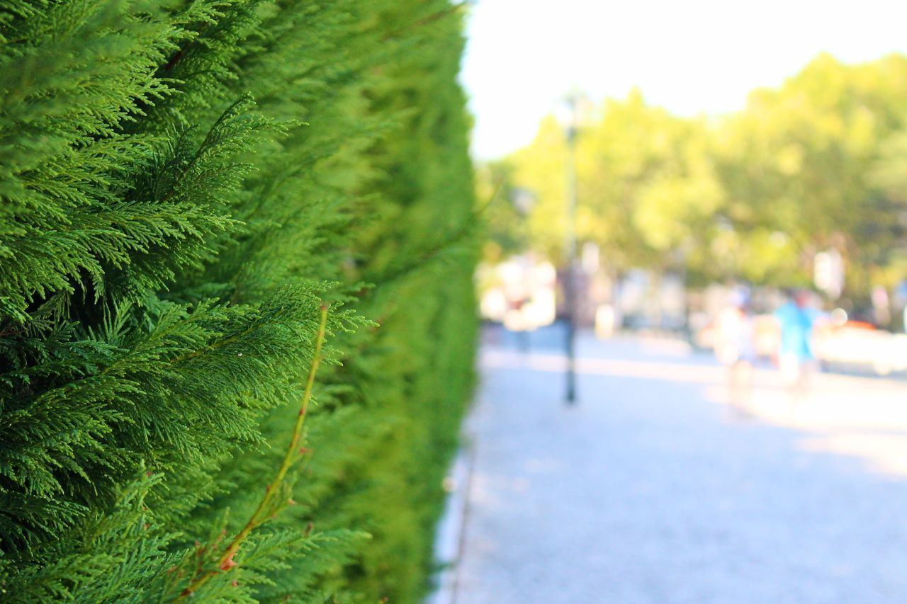 Adapted To The City Beauty In Nature City City Life Close-up Day Detail Exceptional Photographs Fence Focus On Foreground From My Point Of View Green Green Color In A Row My Point Of View My Unique Style Nature Outdoors Perspective Selective Focus Street Street Photography Streetphotography Tree Trees