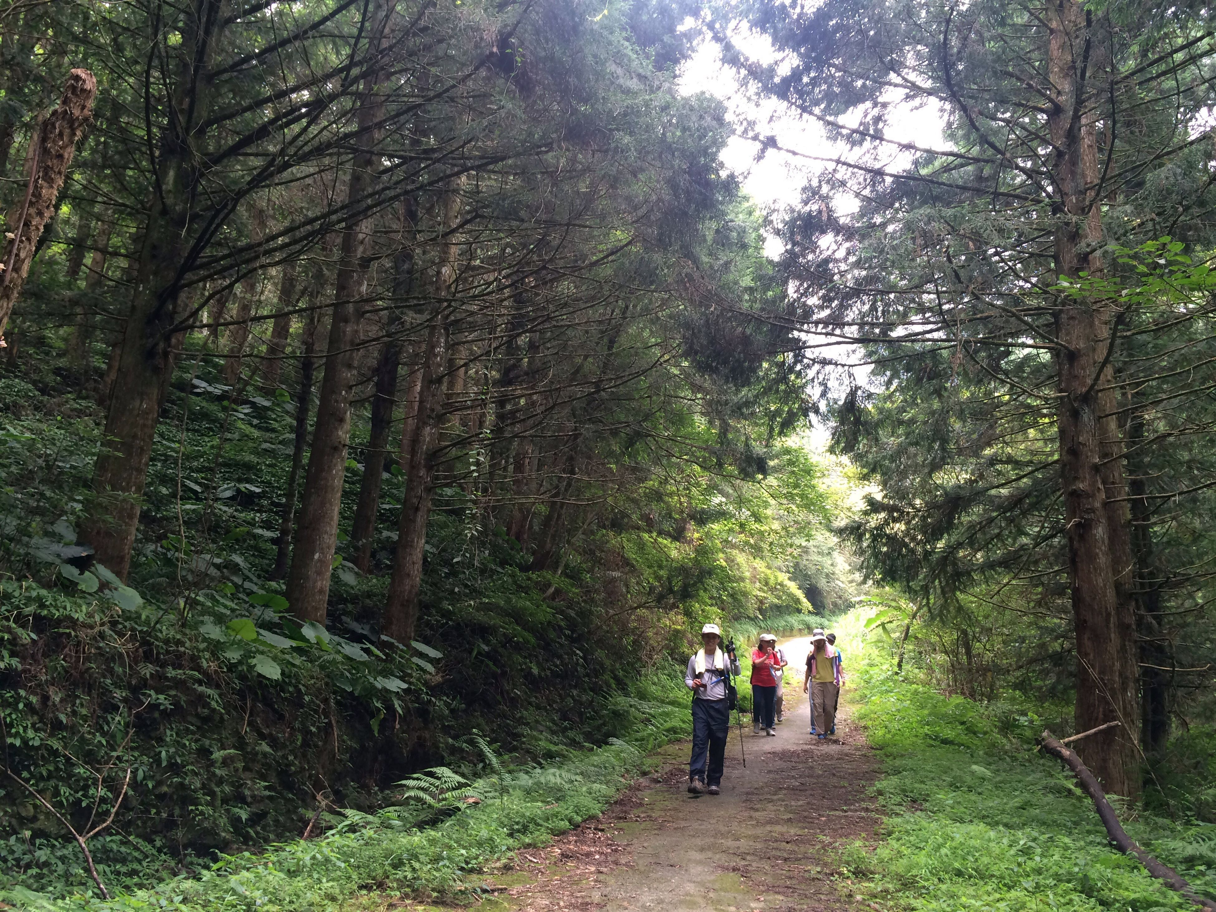 tree, forest, rear view, walking, full length, person, men, tree trunk, growth, nature, tranquil scene, non-urban scene, togetherness, tranquility, beauty in nature, scenics, the way forward, vacations, friendship, casual clothing, day, woodland, remote, footpath, tourism, green color, green