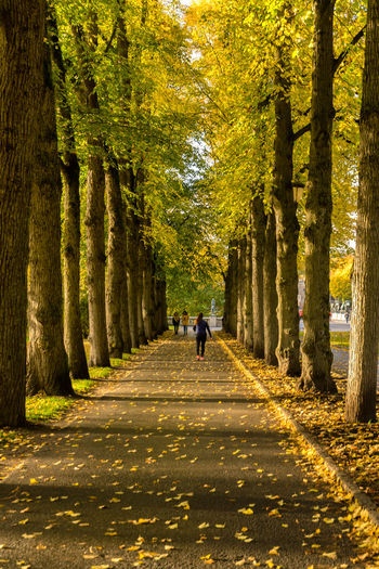 Autumn walk in Oslo, Norway Alley Of Trees Autumn Autumn Collection Autumn Colors Autumn Leaves Norway Tree Trees Vigelandsparken Autumn Autumn🍁🍁🍁 Full Length Leaf Nature Real People Rear View Road The Way Forward Tree Walking