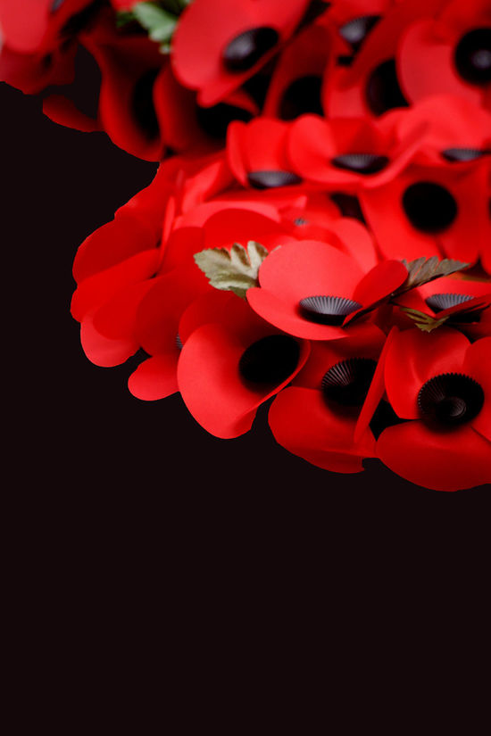 Abstract Remembrance Day Scene Abstract Anzac Day ArmIsHappy Armistice ArmisticeDay Beauty In Nature Black Background Close-up Creative Creativity Day Flower Flower Head Fragility Freshness Indoors  Nature No People Petal Red Remembrance Remembrance Day Studio Shot
