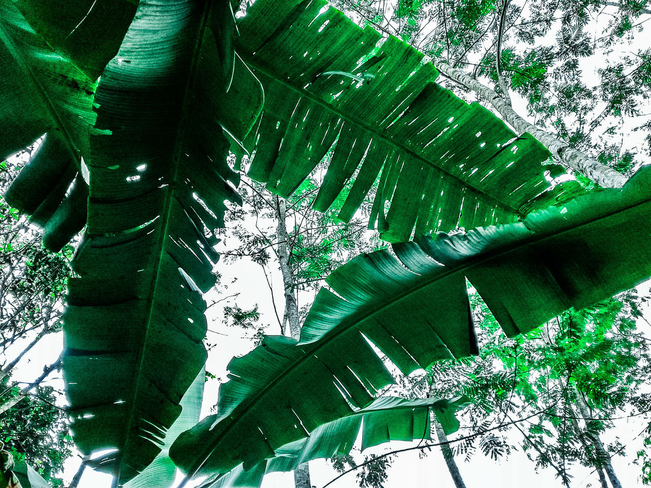 low angle view, green color, tree, growth, leaf, no people, nature, day, outdoors, beauty in nature, branch, sky