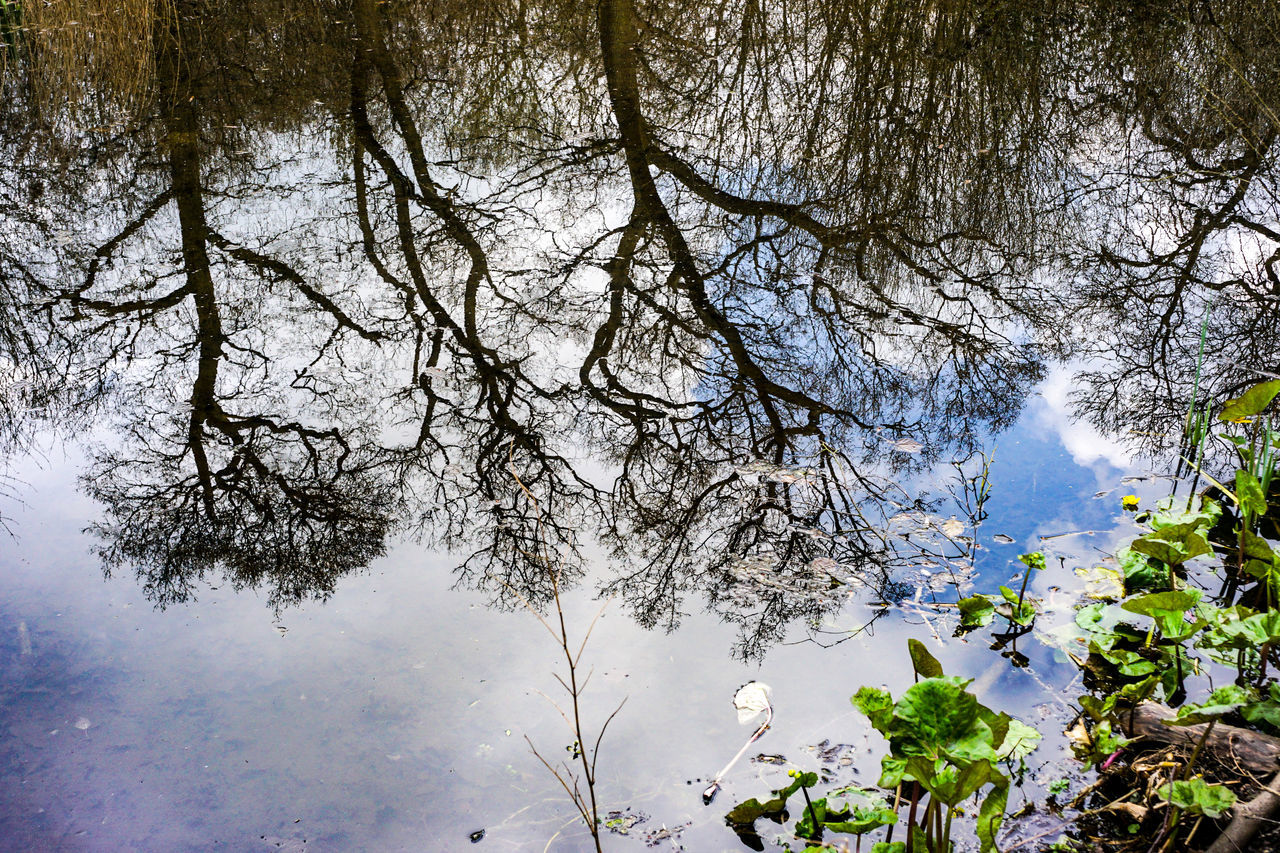 EyeEm Selects Water Reflections In The Water Trees Outdoors No People Green Nature Colchester Essex Uk East Anglia Copford Pond in woods, Copford, Essex