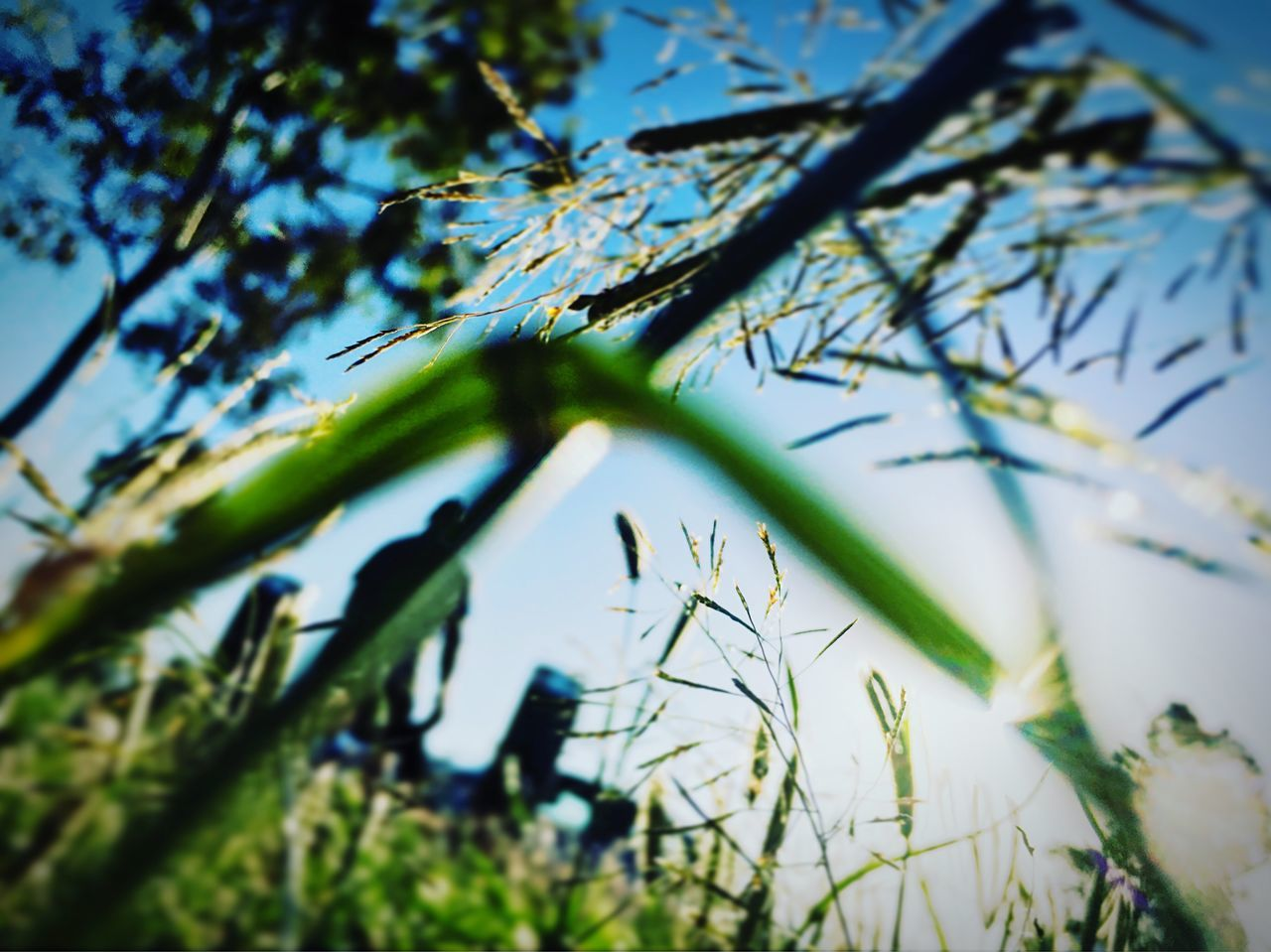 Long Goodbye Letting Go❤ Surrender... Growth Low Angle View Tree Branch Nature Day Selective Focus No People Beauty In Nature Outdoors Green Color Plant Flower Leaf Sky Close-up Fragility Freshness (null)SPIRITUAL HEALING Awakening EyeEmNewHere