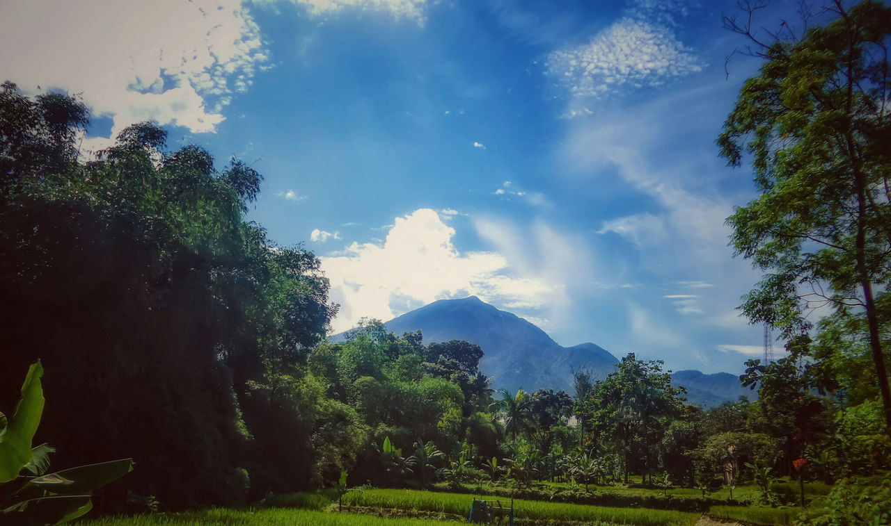 Nature On Your Doorstep Mountains Fields Trees Volcanoes Nature Landscapes With WhiteWall Beautiful View Nature Landscape EyeEm Nature Lover