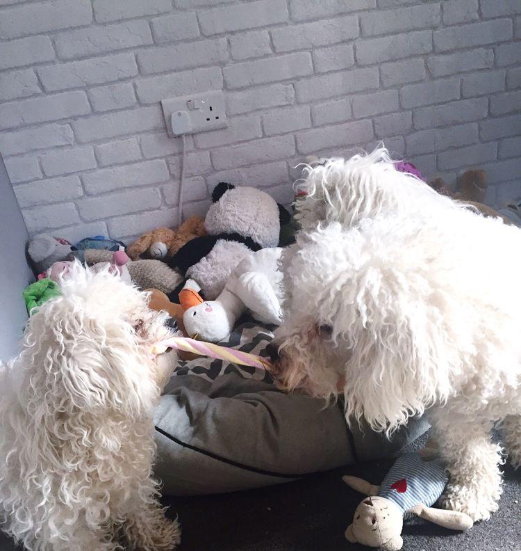 Bichon Frise I Love My Dog Enjoying Life