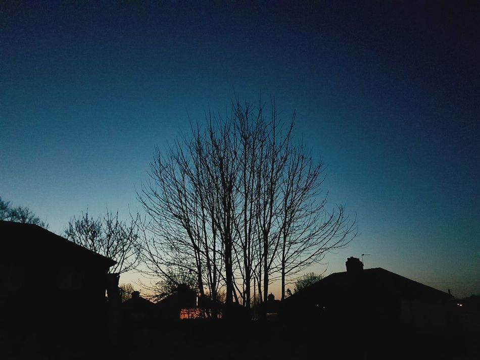 Silhouette Tree Sunset Sky No People Outdoors Night Outside Dusk Dusk Sky Clear Sky Colourful Colourful Sunset