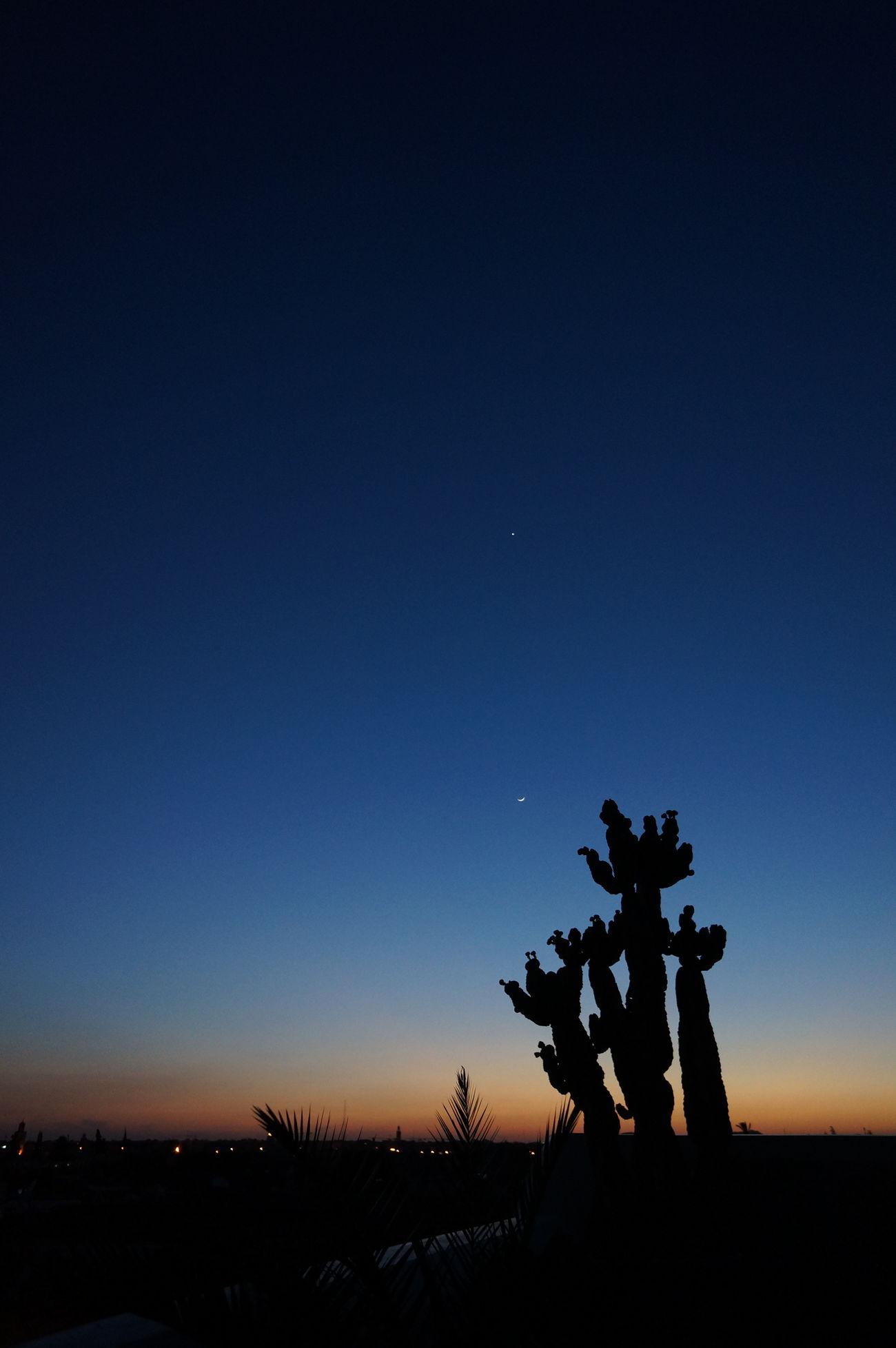 Evening Morroco Nature Night Outdoors Plant Sky Starry Sky Stars