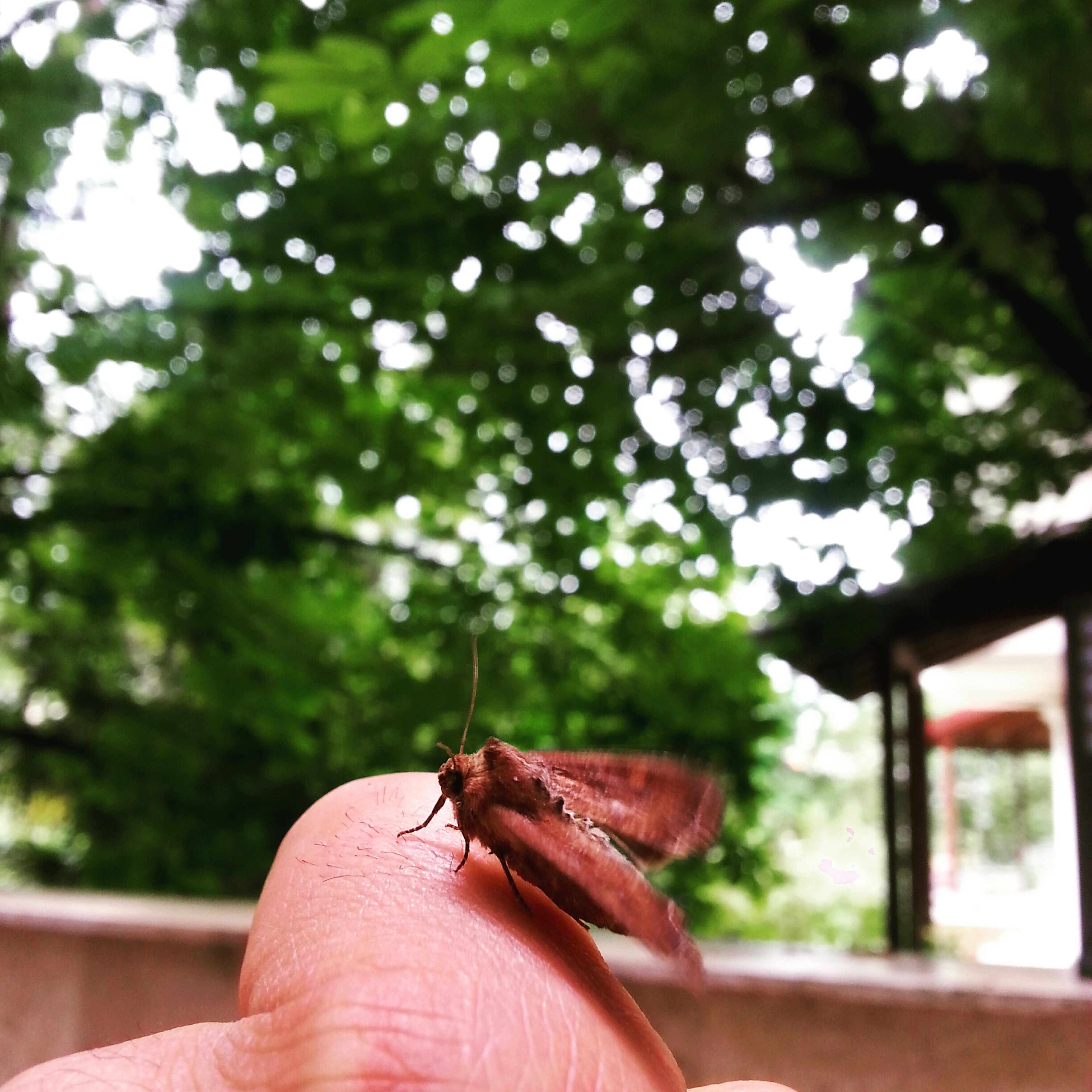 person, holding, part of, cropped, human finger, one animal, personal perspective, focus on foreground, unrecognizable person, animal themes, tree, wildlife, animals in the wild, lifestyles, insect, close-up, leisure activity