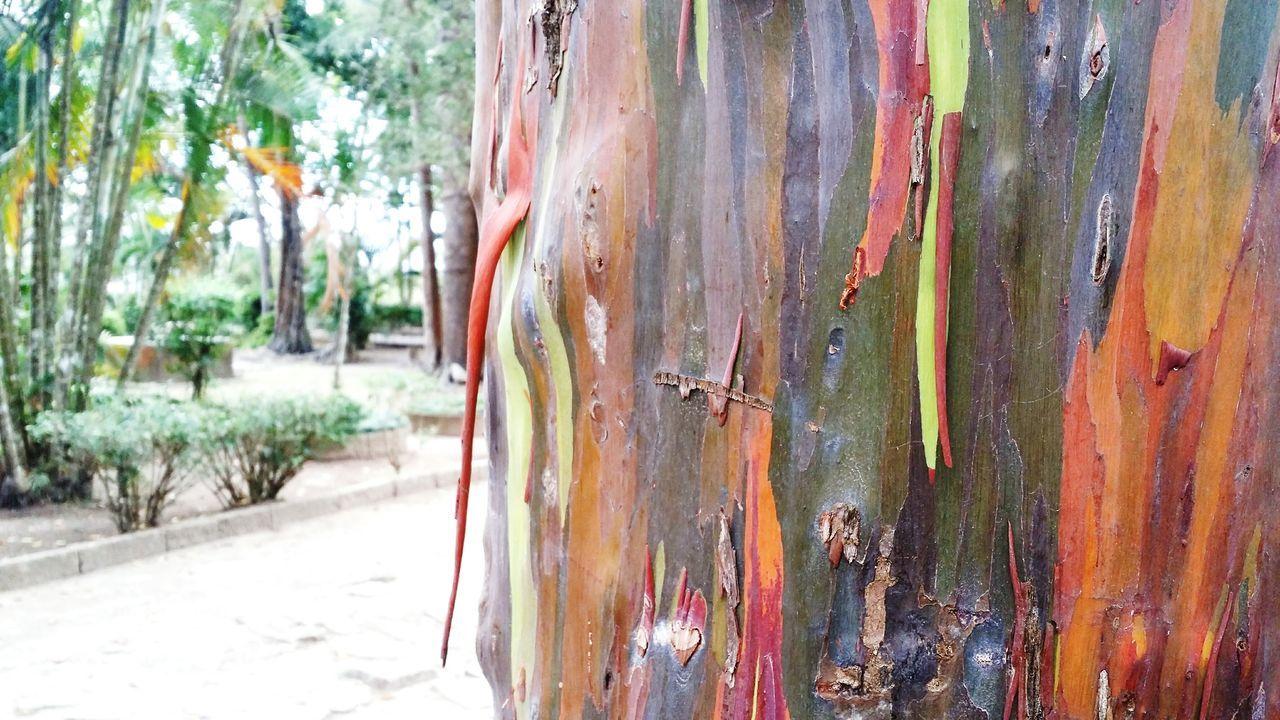 Nature Colors Beautiful Nature