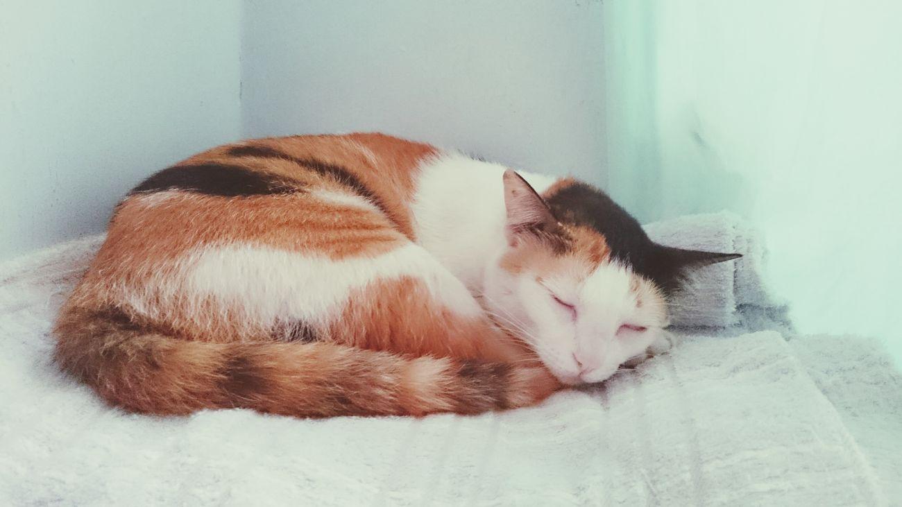 Con mèo mà ngủ trong chăn First Eyeem Photo