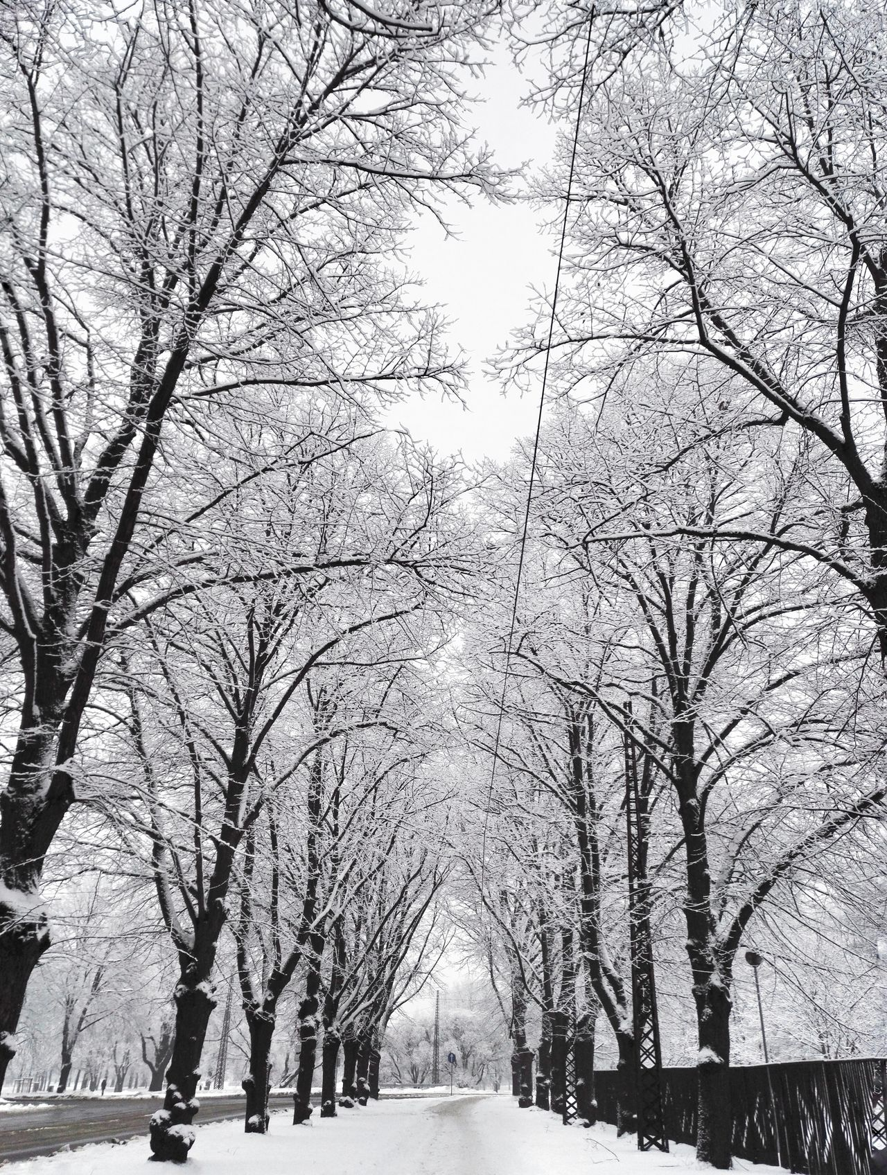 Cityscape Day Cold Temperature Tranquility Winter Black And White Enjoying Life Snow Hello World Weather City Trees The Way Forward