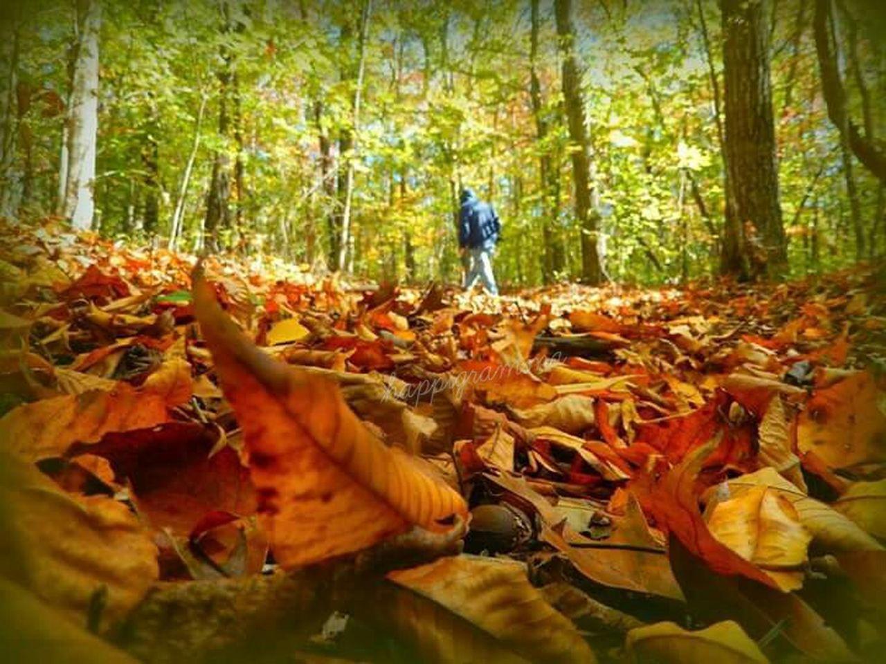 Inthewoids Fall Colors Autumnwalk Happigramma Thesmallestlittlethings Godscountry Serenity EyeEmbestshots EyeEm Best Shots Nikon Photography Eyeemweekly