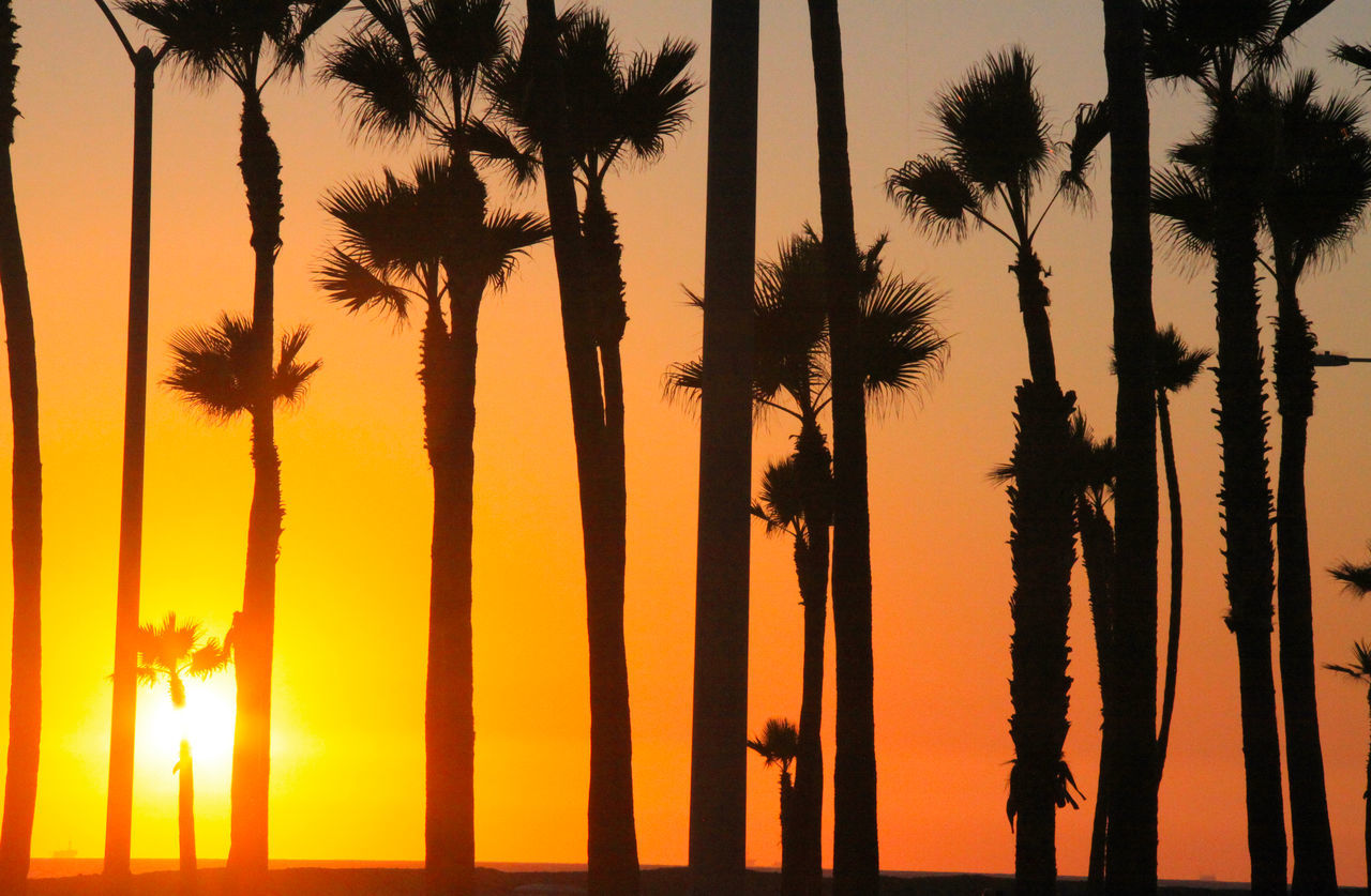 Sara Lee Mckinstry Showcase June Sunset_collection Sunset Silhouettes Sunset Palm Trees Palm Tree Silhouette California 43 Golden Moments