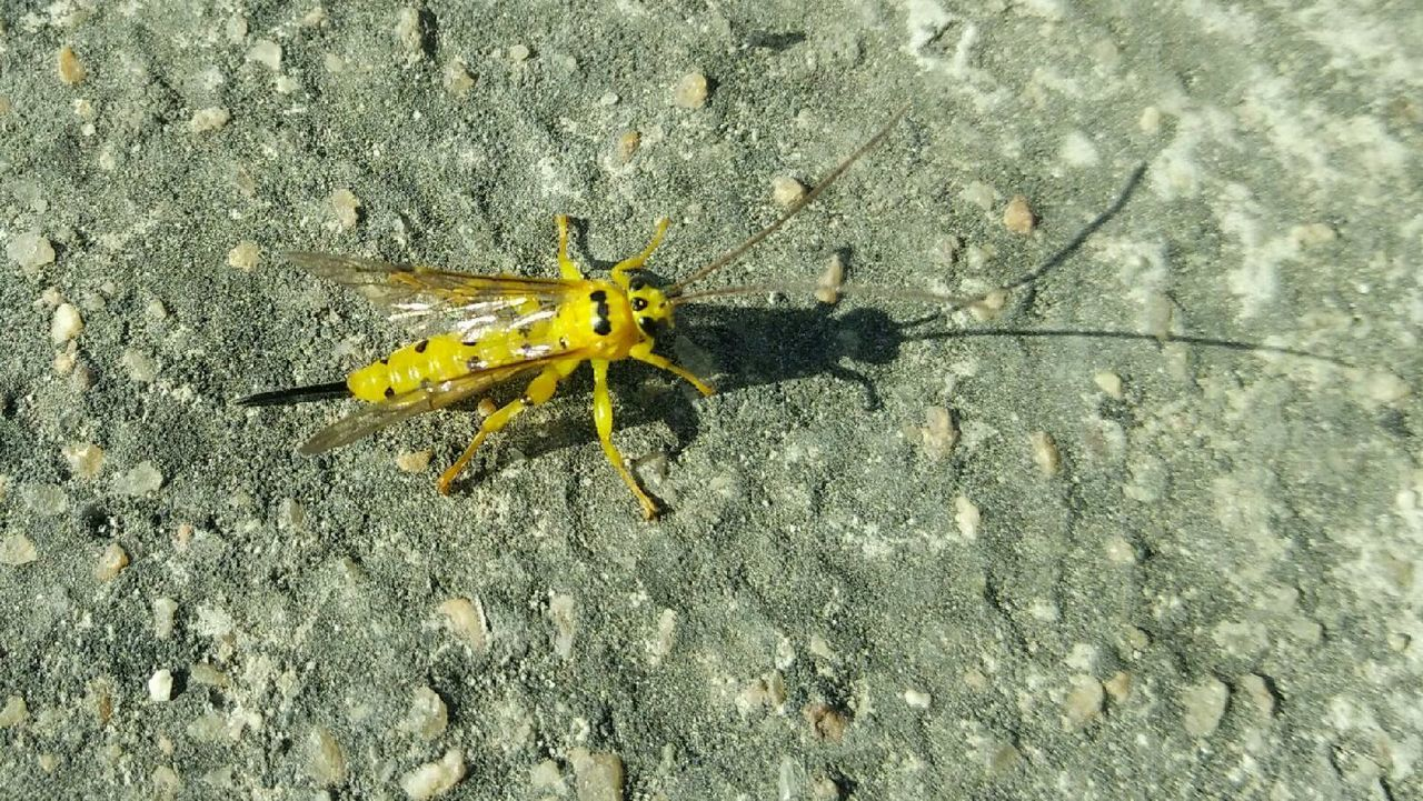 Unknown Insect Daytime Yellow No People Natural Maximum Closeness