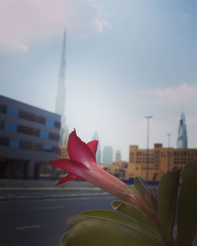 Architecture Built Structure Building Exterior Flower City Focus On Foreground Tower Sky Petal Skyscraper Tall - High Flower Head Modern Capital Cities  Single Flower Famous Place Growth City Life Office Building Freshness DXB Dubai Dubai Life Dubaimarina Burj Khalifa