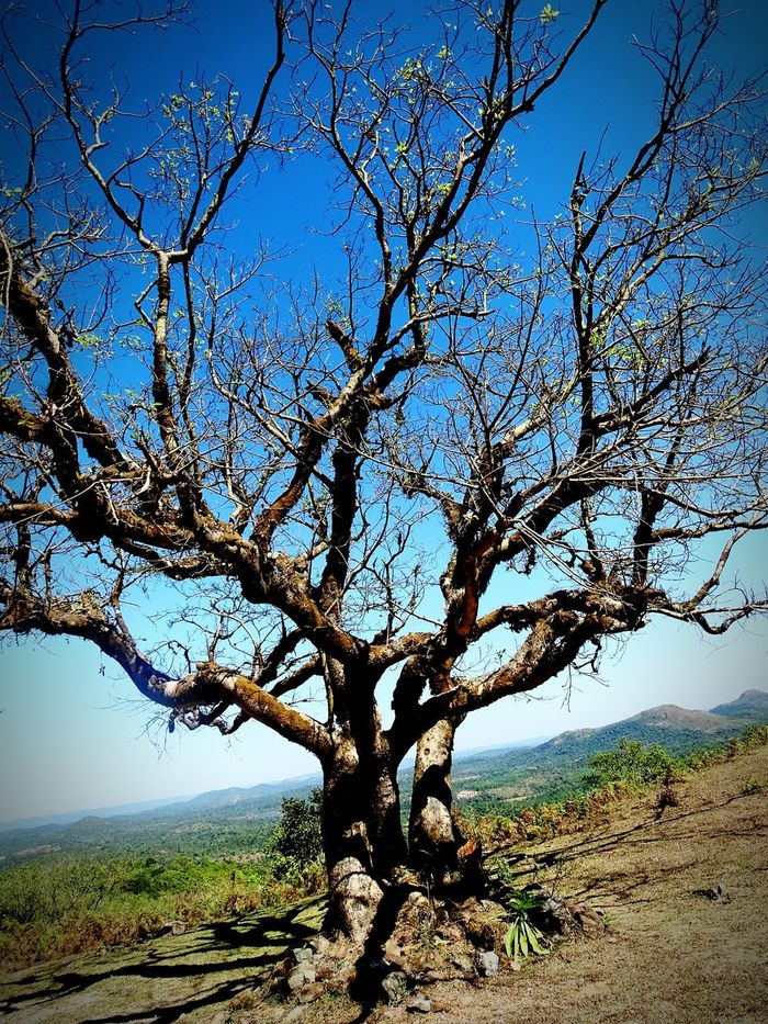 Q Tree Nature Photography Hope Life Along The Way Bodhitree Somewhere in India