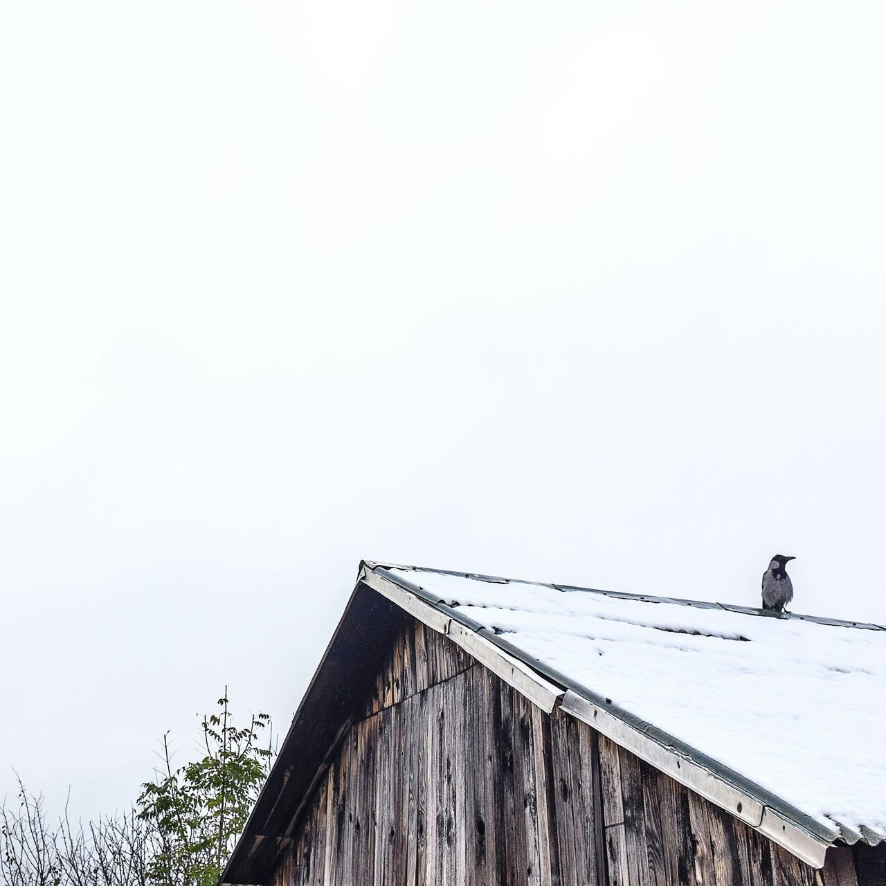 Beautiful stock photos of roof, Animal Themes, Animals In The Wild, Bird, Copy Space