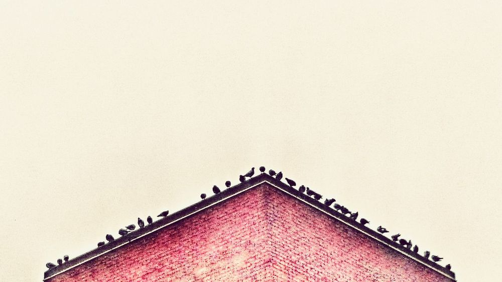Birds Architecture Built Structure No People Birds Low Angle View Background HRD Effects Backgrounds Many First Eyeem Photo Bricks Brick Building Triangle Abstract Minimalist Architecture Millennial Pink