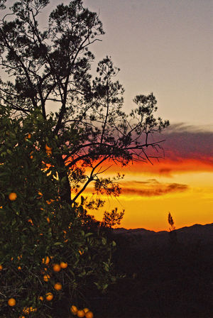Last night's sunset with oranges colored to match the western sky here in Fallbrook. Fall Fallbrook Orange Color S Sky
